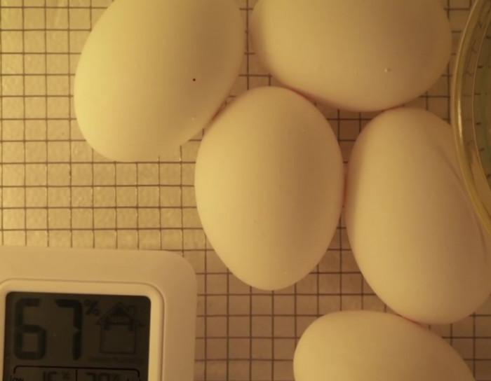 How Birds receive Oxygen inside their Eggs