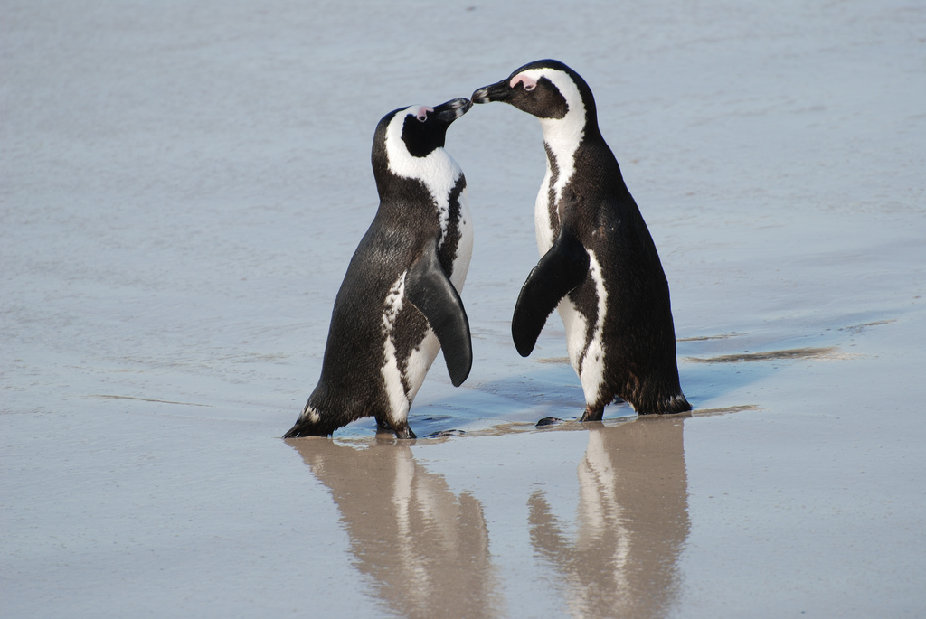 Celebrating Penguin Awareness Day