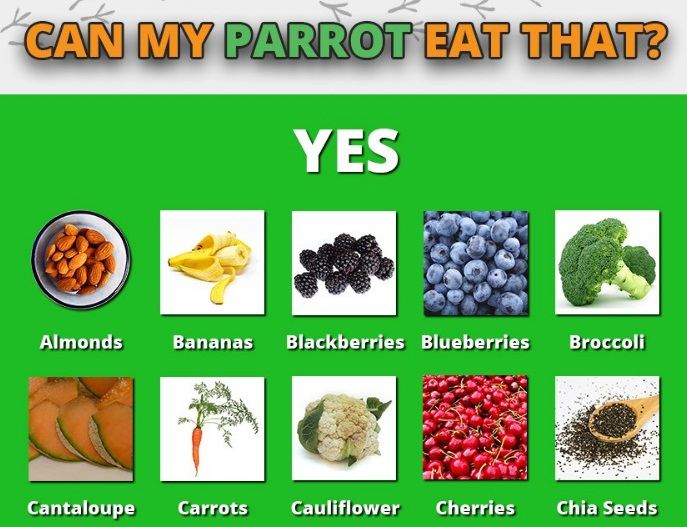Full Guide to Safe (and non-safe) Foods for Parrots