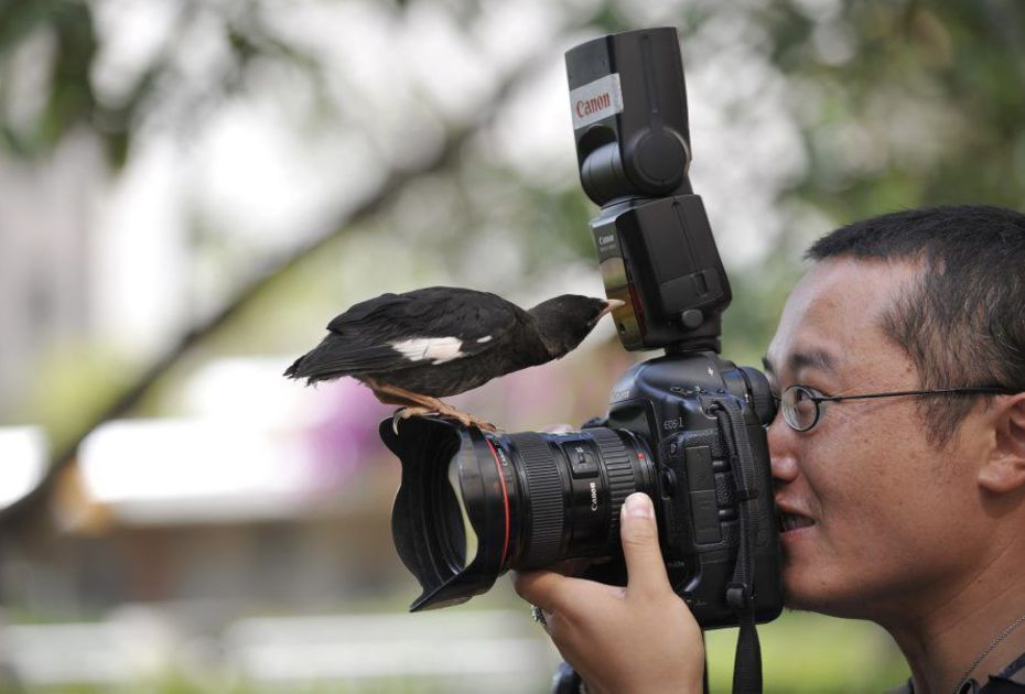 Bird Photographers: Earn Money with your Photos!