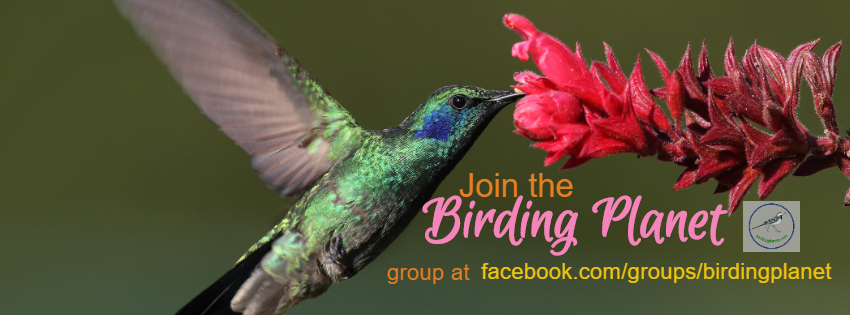 Join our Birding Planet Facebook Group & Get Free eBook!