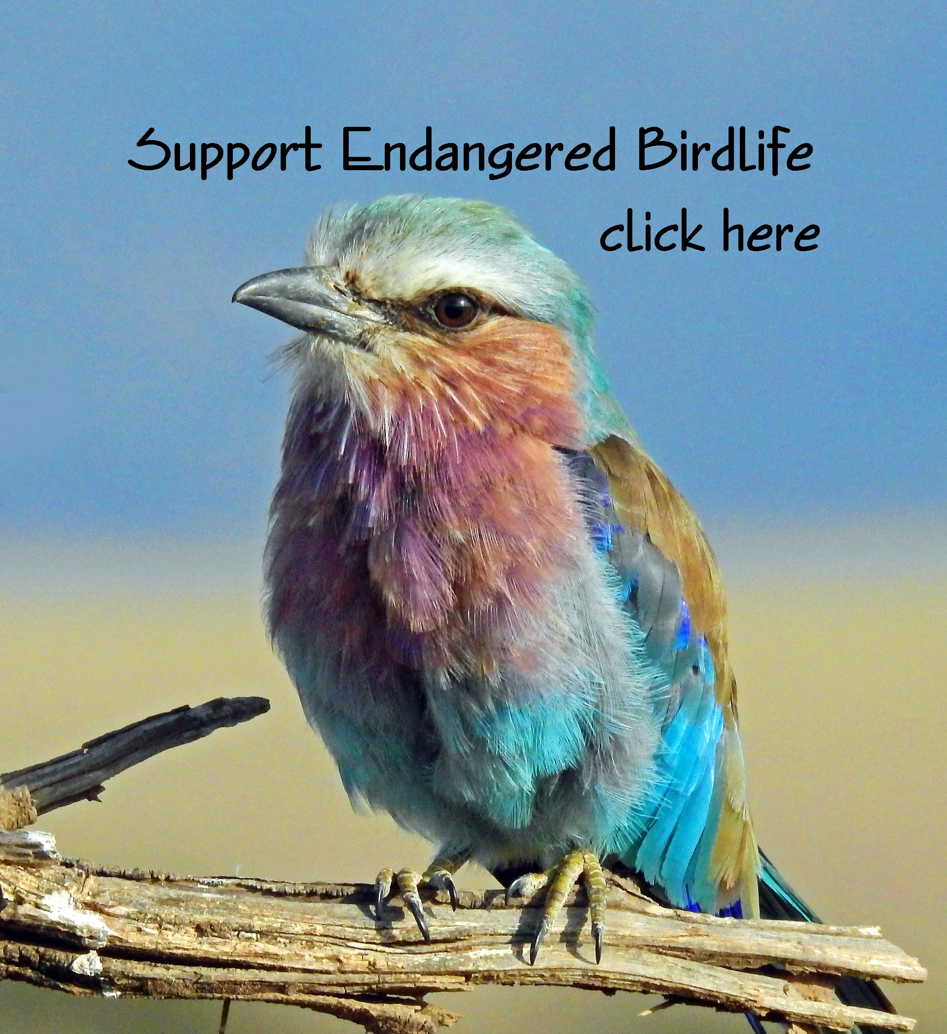 Support endangered birds