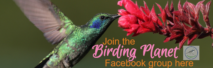 Picture of a Humming Bird advertising Birding Planet's Facebook group.