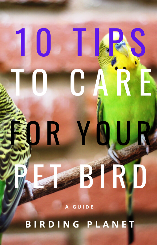 10 tips to care for your pet bird