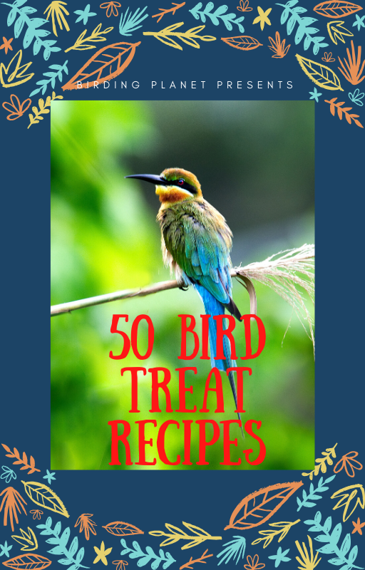 Attract Birds to your Yard with 50 Bird Recipes