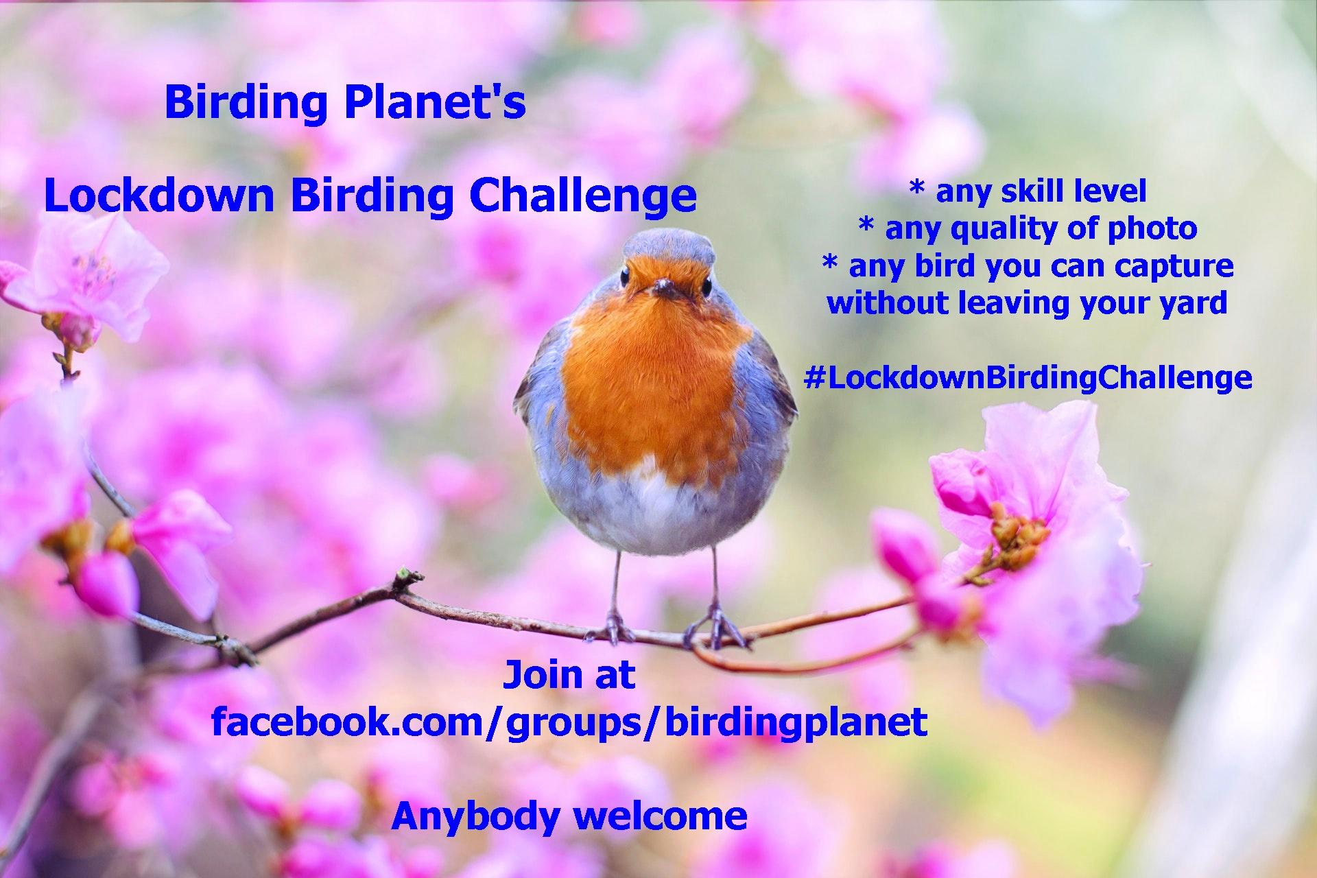 "Join Birding Planet's ""Lockdown Birding Challenge"""