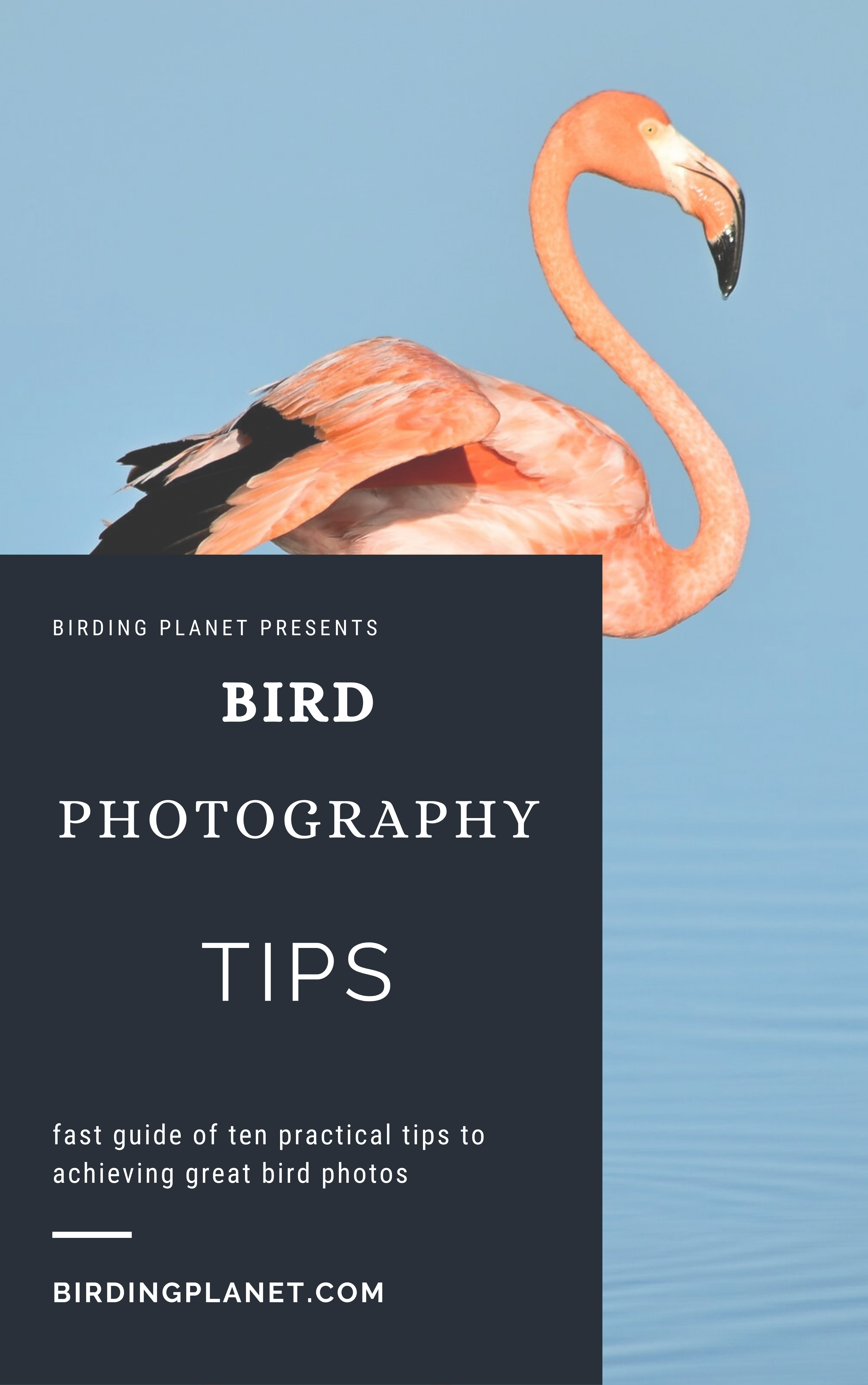 fast guide bird photo tips