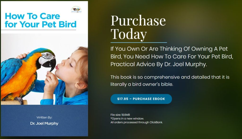 How to care for your pet bird written by veterinarian Dr Joel Murphy