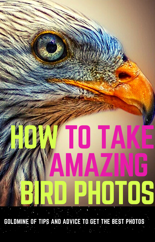 How to Take Amazing Bird Photos