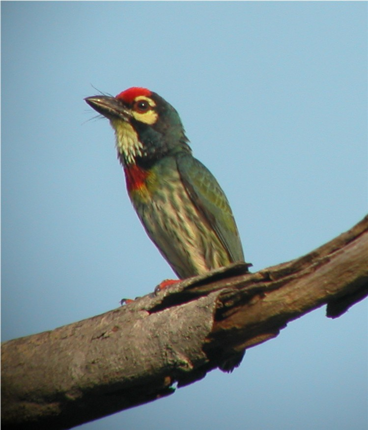 Birding in Malaysia (part 2)