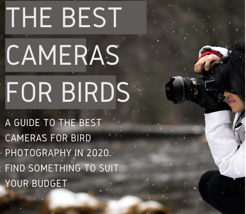 The Best Cameras for Birds