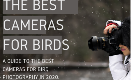 Get Bird Photography Guides