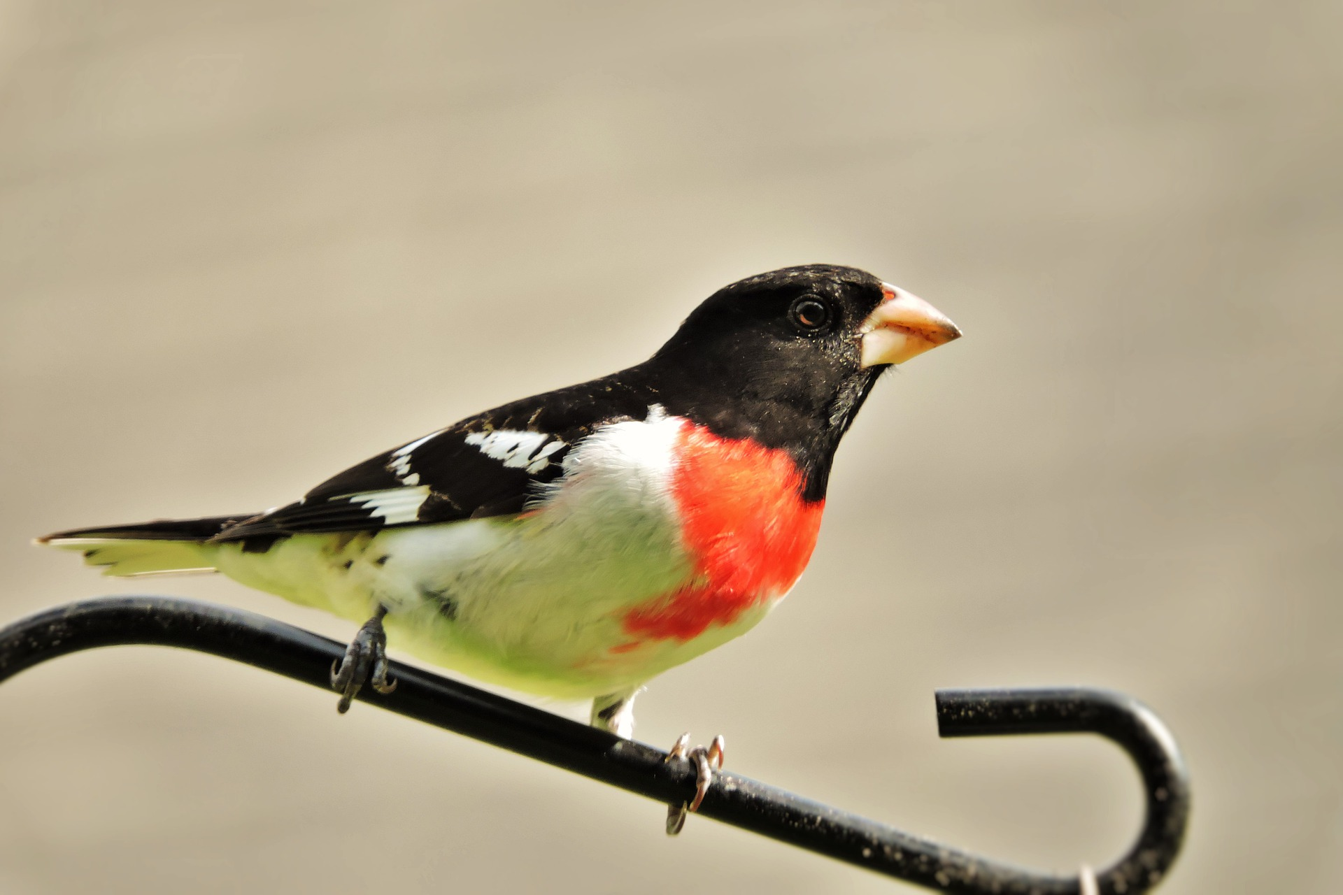 Submit Your Birding Story